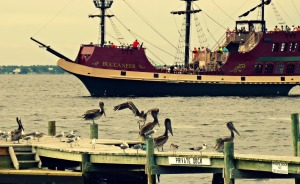 Pelicans and Boat DD