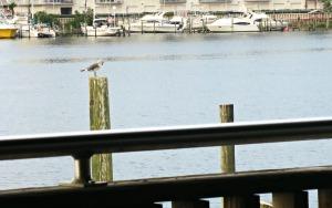 Harbor Docks view 2