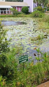 Hurricane alligator sign